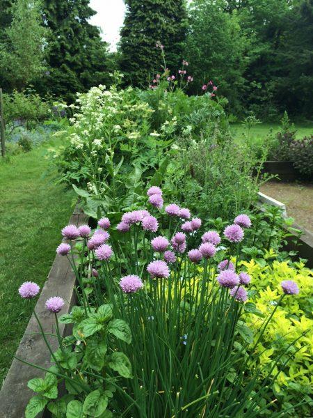 The herb garden at Martineau gardens